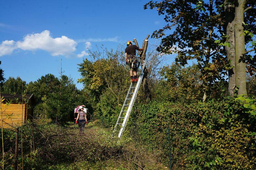 Klettergerüst Um Baum : Baumpflege pogats terzer willkommen auf natur im garten