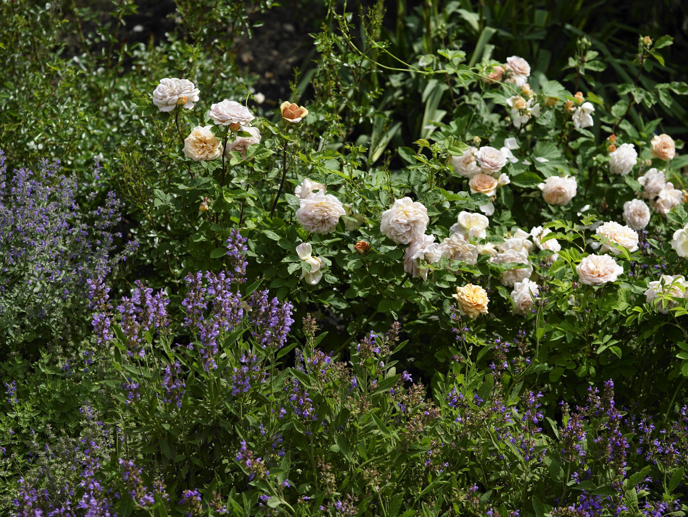 Rosenschnittkurs willkommen auf natur im garten for Natur im garten