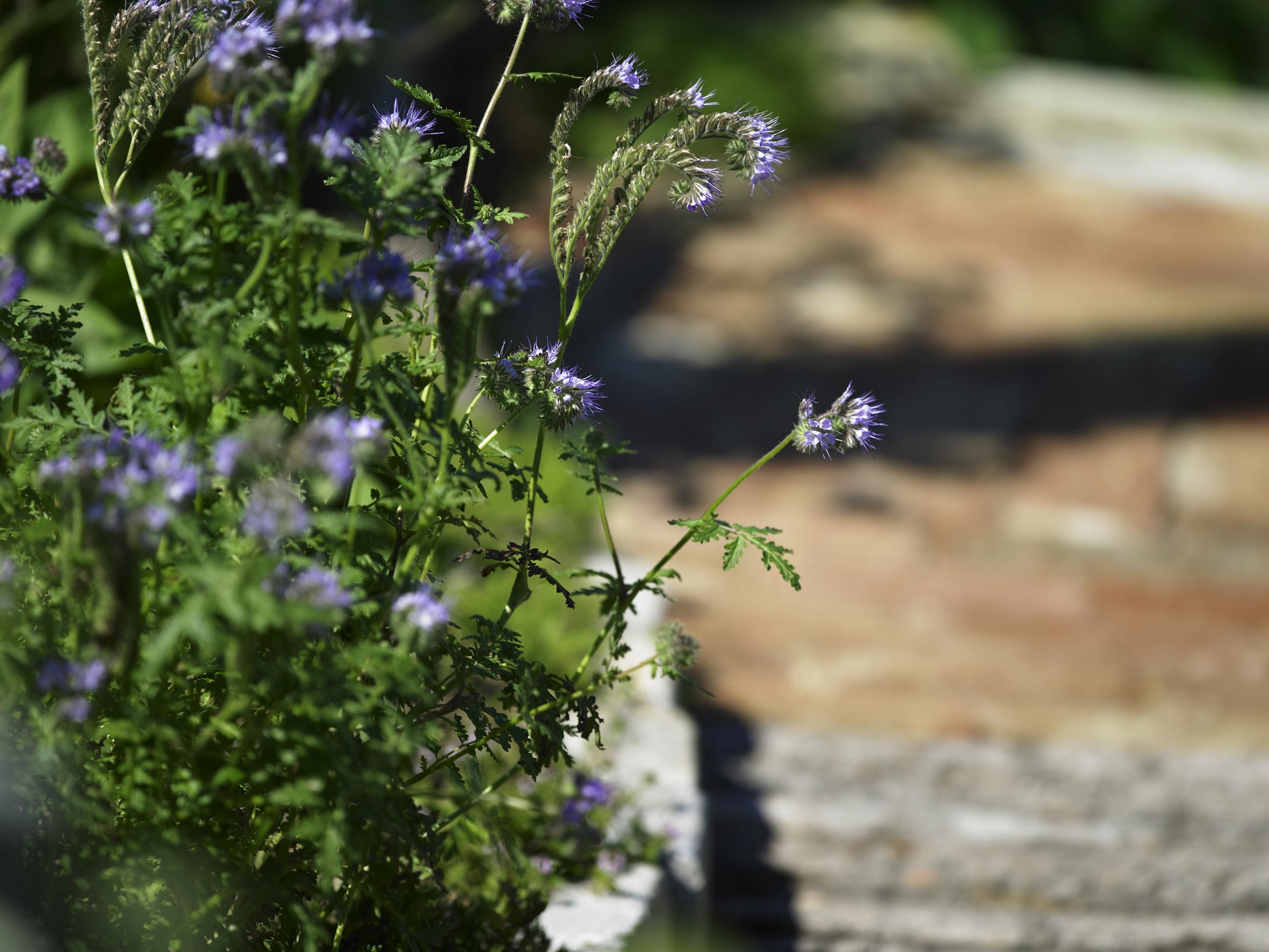 Bepflanzung Willkommen Auf Natur Im Garten