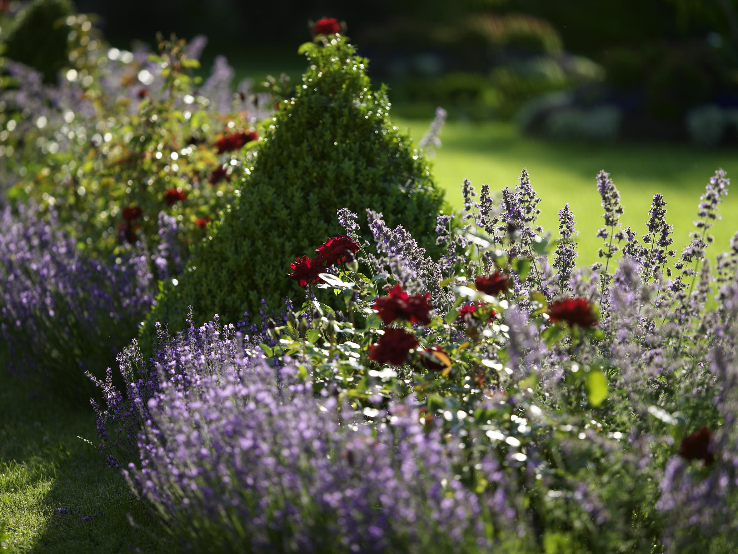 verein european garden association willkommen auf natur im garten. Black Bedroom Furniture Sets. Home Design Ideas
