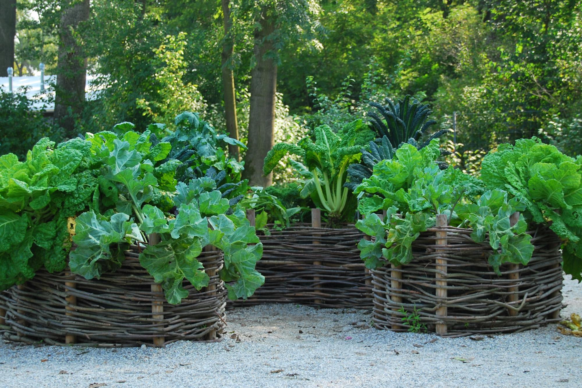 Natur Im Garten Tipp Willkommen Auf Natur Im Garten