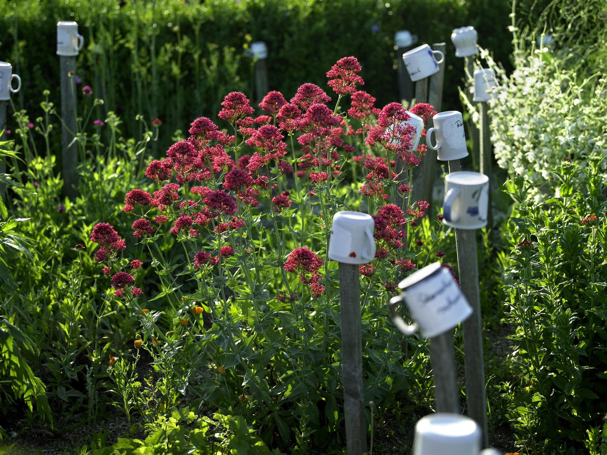 Schaugarten gertraude schmidt willkommen auf natur im garten for Natur im garten