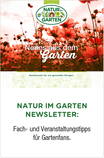 Neues Newsletter